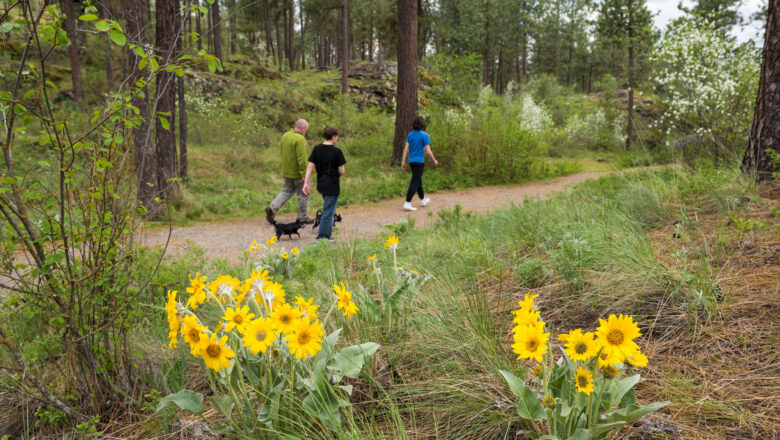 Family walking trail with yellow wildflowers